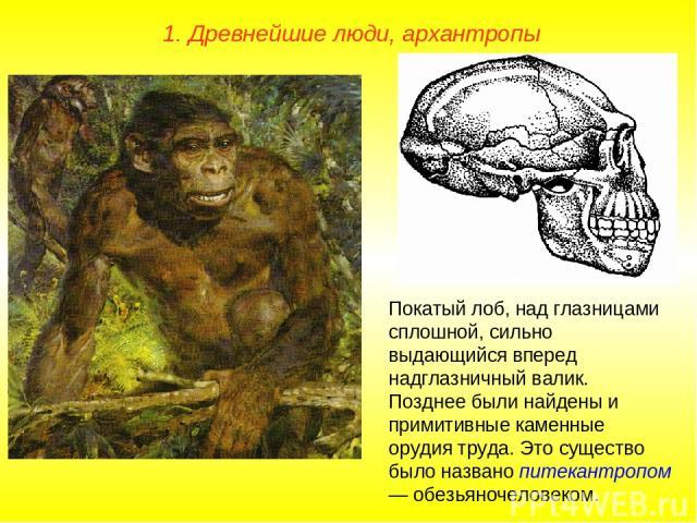 1. Древнейшие люди, архантропы Покатый лоб, над глазницами сплошной, сильно выдающийся вперед надглазничный валик. Позднее были найдены и примитивные каменные орудия труда. Это существо было названо питекантропом — обезьяночеловеком.