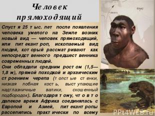 Спустя 25 тыс. лет после появления человека умелого на Земле возник новый вид —