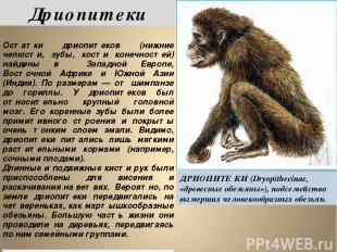 Дриопитеки ДРИОПИТЕ КИ (Dryopithecinae, «древесные обезьяны»), подсемейство выме