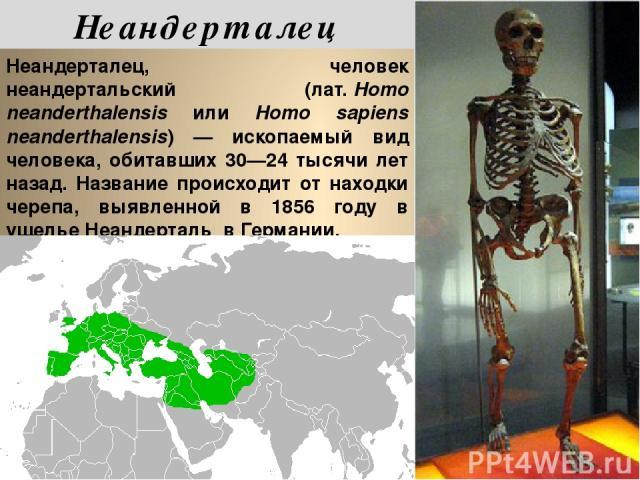 Неандерта лец, человек неандертальский (лат.Homo neanderthalensis или Homo sapiens neanderthalensis) — ископаемый вид человека, обитавших 30—24 тысячи лет назад. Название происходит от находки черепа, выявленной в 1856 году в ущелье Неандерталь в Г…