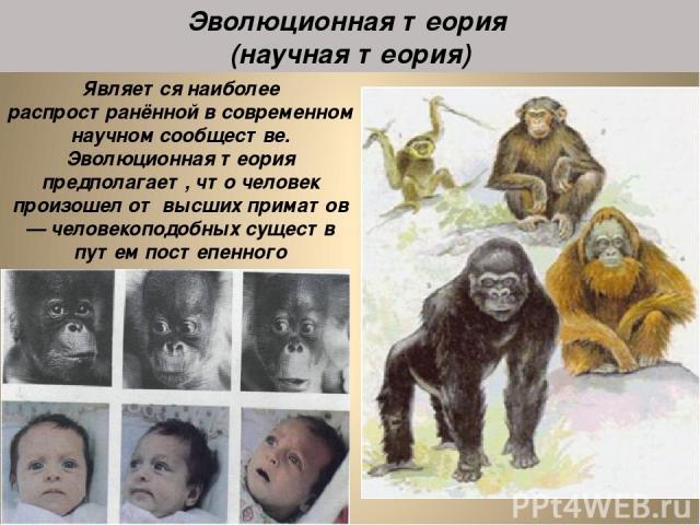 Является наиболее распространённой в современном научном сообществе. Эволюционная теория предполагает, что человек произошел от высших приматов — человекоподобных существ путем постепенного видоизменения под влиянием внешних факторов и естественного…