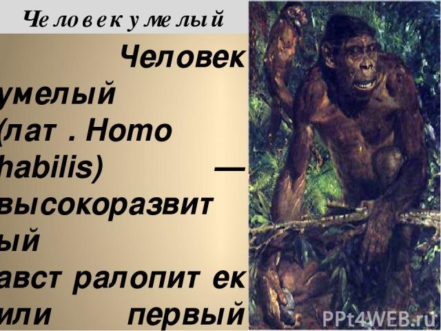 Челове к уме лый (лат.Homo habilis) — высокоразвитый австралопитек или первый представитель рода Homo, появившийся на Земле около 2 млн. лет назад. Обнаружен археологами Лики (Мэри и Джонатаном) в 1960 году и описан в ущелье Олдувай в Танзании. В О…