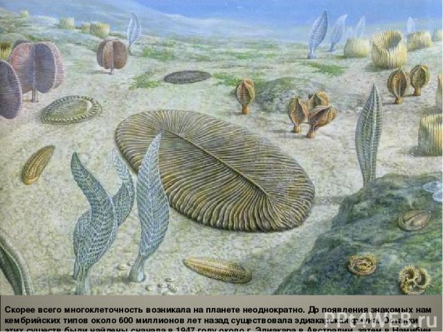 Скорее всего многоклеточность возникала на планете неоднократно. До появления знакомых нам кембрийских типов около 600 миллионов лет назад существовала эдиакарская фауна. Останки этих существ были найдены сначала в 1947 году около г. Эдиакара в Авст…