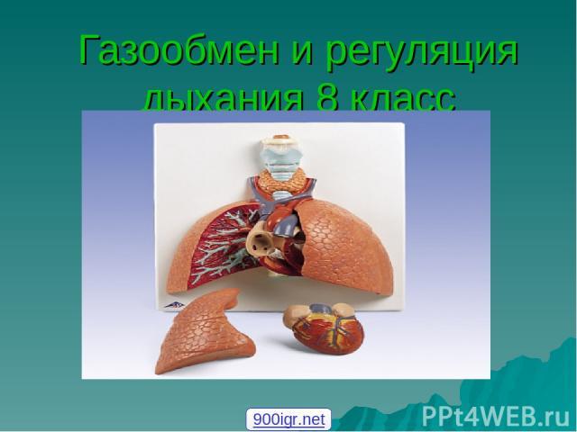 Газообмен и регуляция дыхания 8 класс 900igr.net