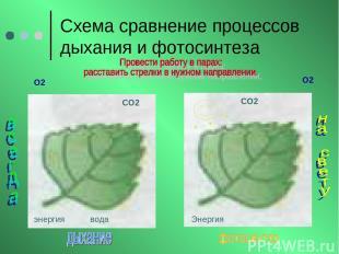 Схема сравнение процессов дыхания и фотосинтеза О2 О2 СО2 СО2 энергия вода Энерг