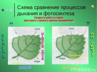 Схема сравнение процессов дыхания и фотосинтеза О2 О2 СО2 СО2 вода вода энергия