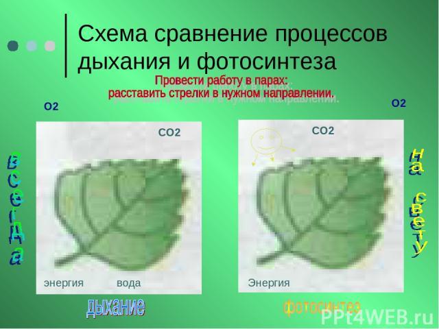 Схема сравнение процессов дыхания и фотосинтеза О2 О2 СО2 СО2 энергия вода Энергия