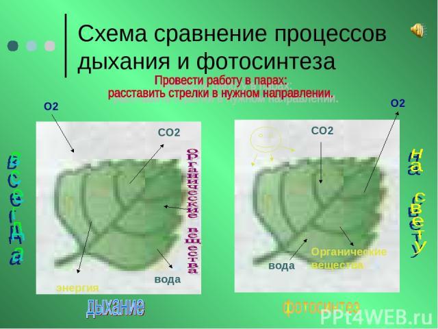 Схема сравнение процессов дыхания и фотосинтеза О2 О2 СО2 СО2 вода вода энергия Органические вещества
