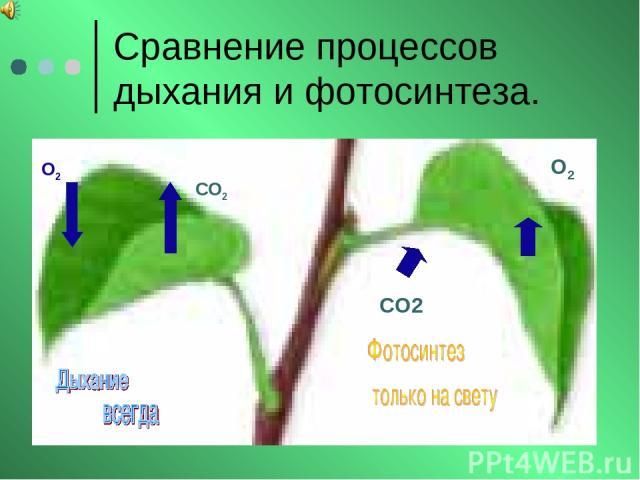 Сравнение процессов дыхания и фотосинтеза. О2 СО2 СО2 О2
