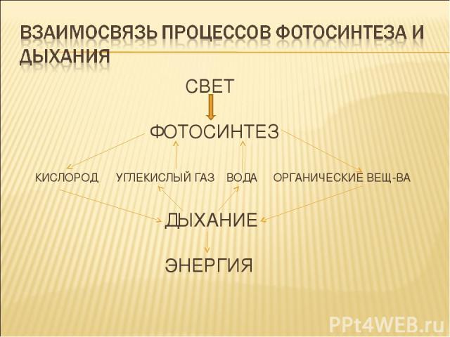 СВЕТ  ФОТОСИНТЕЗ КИСЛОРОД УГЛЕКИСЛЫЙ ГАЗ ВОДА ОРГАНИЧЕСКИЕ ВЕЩ-ВА ДЫХАНИЕ ЭНЕРГИЯ