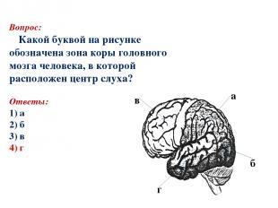 Вопрос: Какой буквой на рисунке обозначена зона коры головного мозга человека, в