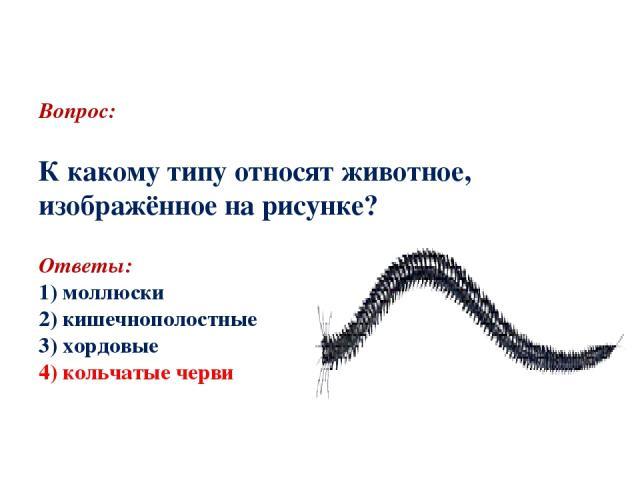 Вопрос: К какому типу относят животное, изображённое на рисунке? Ответы: 1) моллюски 2) кишечнополостные 3) хордовые 4) кольчатые черви