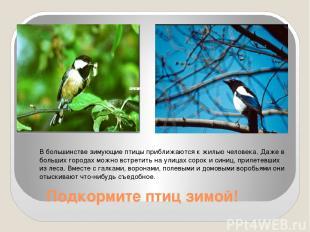 Подкормите птиц зимой! В большинстве зимующие птицы приближаются к жилью человек