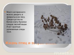 Жизнь птиц и зверей зимой Много интересного можно увидеть в февральском лесу. Ср