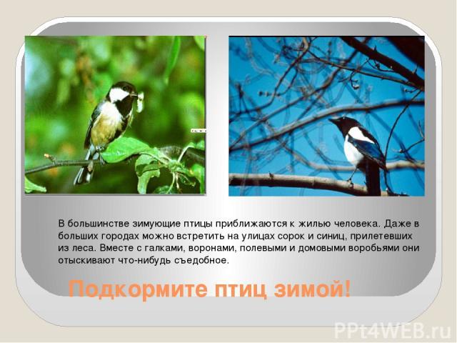 Подкормите птиц зимой! В большинстве зимующие птицы приближаются к жилью человека. Даже в больших городах можно встретить на улицах сорок и синиц, прилетевших из леса. Вместе с галками, воронами, полевыми и домовыми воробьями они отыскивают что-нибу…