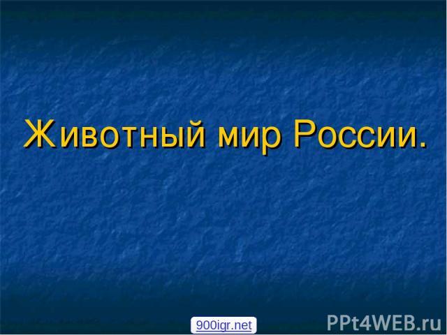 Животный мир России. 900igr.net