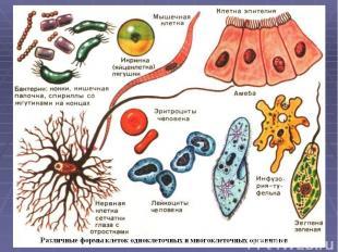 Сегодня используют такие методы изучения клеток: - рентгеноструктурный анализ -