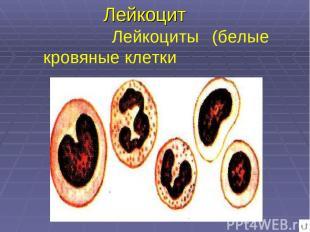 Лейкоцит Лейкоциты (белые кровяные клетки