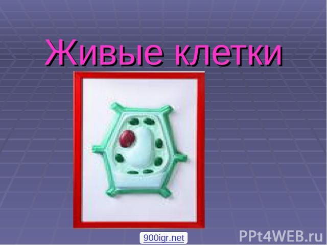 Живые клетки 900igr.net