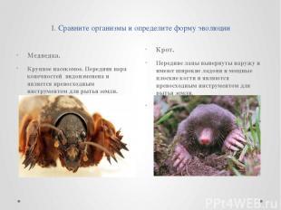 1. Сравните организмы и определите форму эволюции Медведка. Крупное насекомое. П