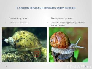 8. Сравните организмы и определите форму эволюции Большой прудовик Обитатель вод