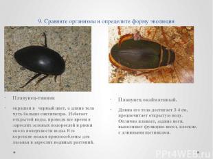 9. Сравните организмы и определите форму эволюции Плавунец-тинник окрашен в черн
