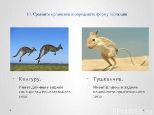 10. Сравните организмы и определите форму эволюции Кенгуру. Имеет длинные задние