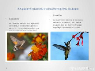 13. Сравните организмы и определите форму эволюции Бражник не садится на цветок