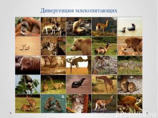 Дивергенция млекопитающих