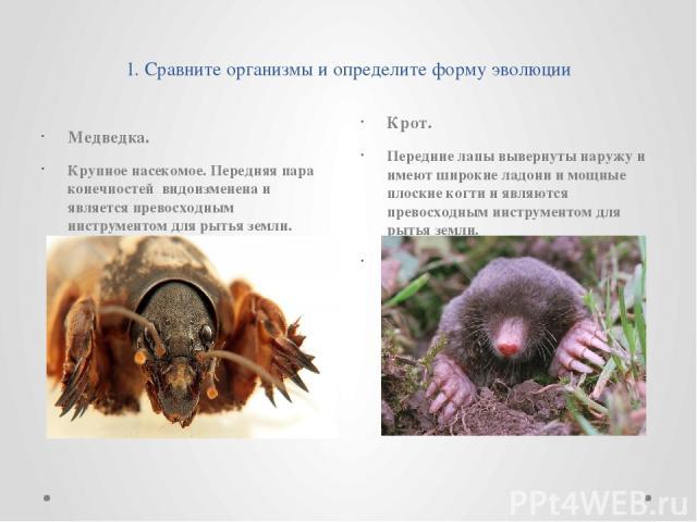 1. Сравните организмы и определите форму эволюции Медведка. Крупное насекомое. Передняя пара конечностей видоизменена и является превосходным инструментом для рытья земли. Крот. Передние лапы вывернуты наружу и имеют широкие ладони и мощные плоские …