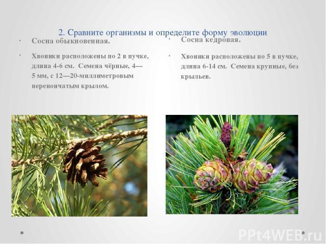 2. Сравните организмы и определите форму эволюции Сосна обыкновенная. Хвоинки расположены по 2 в пучке, длина 4-6 см. Семена чёрные, 4—5мм, с 12—20-миллиметровым перепончатым крылом. Сосна кедровая. Хвоинки расположены по 5 в пучке, длина 6-14 см. …