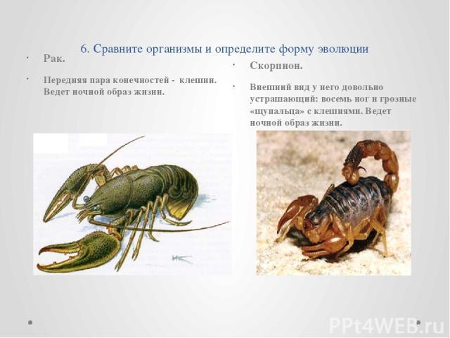 6. Сравните организмы и определите форму эволюции Рак. Передняя пара конечностей - клешни. Ведет ночной образ жизни. Скорпион. Внешний вид у него довольно устрашающий: восемь ног и грозные «щупальца» с клешнями. Ведет ночной образ жизни.