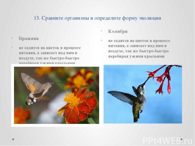 13. Сравните организмы и определите форму эволюции Бражник не садится на цветок в процессе питания, а зависает над ним в воздухе, так же быстро-быстро перебирая узкими крыльями Колибри не садится на цветок в процессе питания, а зависает над ним в во…
