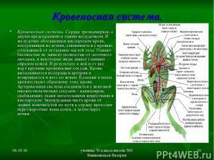 * ученица 7б класса школы №5 Вишневецкая Валерия * Кровеносная система. Кровенос