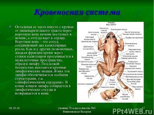* ученица 7б класса школы №5 Вишневецкая Валерия * Кровеносная система Остальная