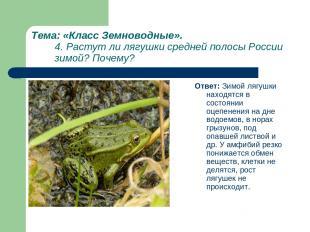 Тема: «Класс Земноводные». 4. Растут ли лягушки средней полосы России зимой? Поч
