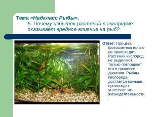 Тема «Надкласс Рыбы». 5. Почему избыток растений в аквариуме оказывает вредное в