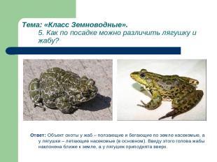 Тема: «Класс Земноводные». 5. Как по посадке можно различить лягушку и жабу? Отв