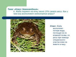 Тема: «Класс Земноводные». 6. Жаба теряет на ночь около 15% своего веса. Как и ч
