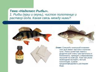 Тема «Надкласс Рыбы». 1. Рыбы (ерш и окунь), чистое полотенце и раствор йода. Ка