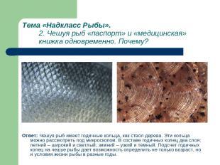 Тема «Надкласс Рыбы». 2. Чешуя рыб «паспорт» и «медицинская» книжка одновременно