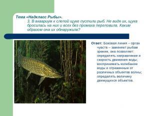 Тема «Надкласс Рыбы». 3. В аквариум к слепой щуке пустили рыб. Не видя их, щука