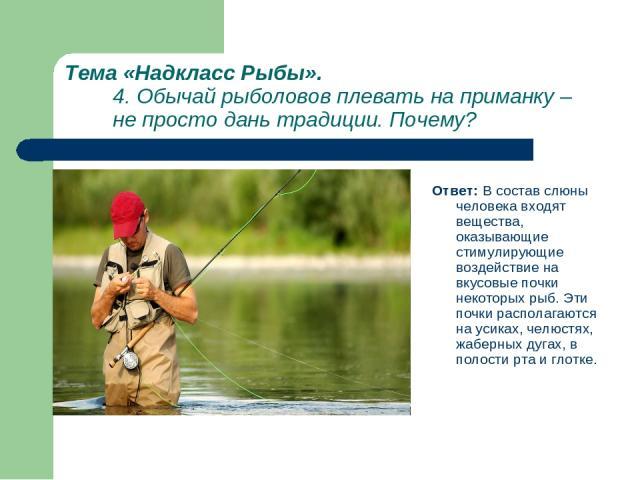 Тема «Надкласс Рыбы». 4. Обычай рыболовов плевать на приманку – не просто дань традиции. Почему? Ответ: В состав слюны человека входят вещества, оказывающие стимулирующие воздействие на вкусовые почки некоторых рыб. Эти почки располагаются на усиках…