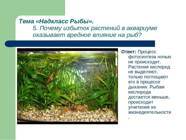Тема «Надкласс Рыбы». 5. Почему избыток растений в аквариуме оказывает вредное влияние на рыб? Ответ: Процесс фотосинтеза ночью не происходит. Растения кислород не выделяют, только поглощают его в процессе дыхания. Рыбам кислорода достается меньше, …
