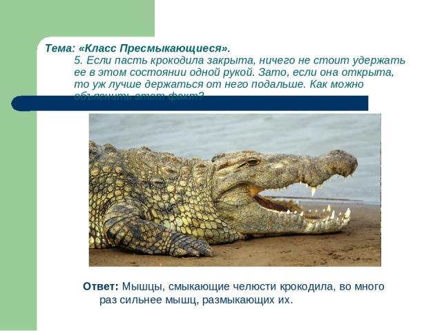 Тема: «Класс Пресмыкающиеся». 5. Если пасть крокодила закрыта, ничего не стоит удержать ее в этом состоянии одной рукой. Зато, если она открыта, то уж лучше держаться от него подальше. Как можно объяснить этот факт? Ответ: Мышцы, смыкающие челюсти к…