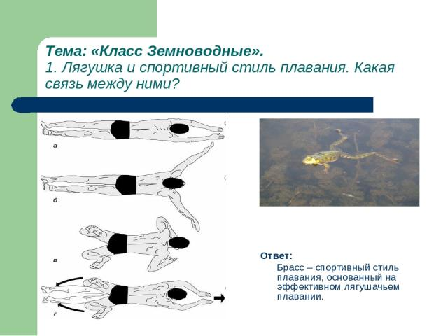 Тема: «Класс Земноводные». 1. Лягушка и спортивный стиль плавания. Какая связь между ними? Ответ: Брасс – спортивный стиль плавания, основанный на эффективном лягушачьем плавании.