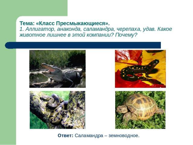 Тема: «Класс Пресмыкающиеся». 1. Аллигатор, анаконда, саламандра, черепаха, удав. Какое животное лишнее в этой компании? Почему? Ответ: Саламандра – земноводное.