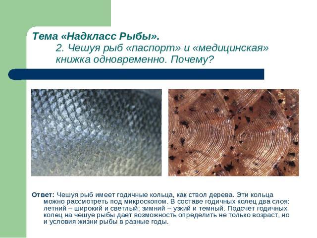 Тема «Надкласс Рыбы». 2. Чешуя рыб «паспорт» и «медицинская» книжка одновременно. Почему? Ответ: Чешуя рыб имеет годичные кольца, как ствол дерева. Эти кольца можно рассмотреть под микроскопом. В составе годичных колец два слоя: летний – широкий и с…