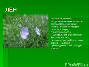 ЛЁН Основным районом возделывания льна является Северо-Западный район России, а