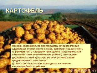 КАРТОФЕЛЬ Посадки картофеля, попроизводству которого Россия удерживает первое м